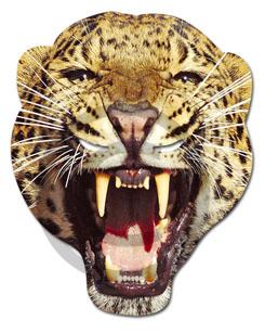 Leopard copy_1 copy